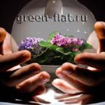 Сад под стеклом — крошечная Вселенная в твоих руках