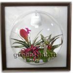 Растения для цветочных композиций под стеклом.