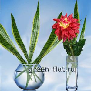 листья сансевьеры в вазе