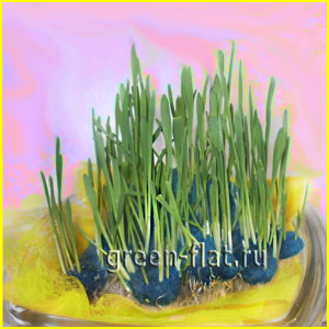 трава для питомцев
