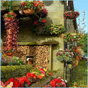 дом, где любят цветы
