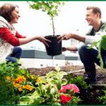 Пересадка домашних растений.