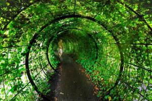 зеленый тоннель в ядовитом саду